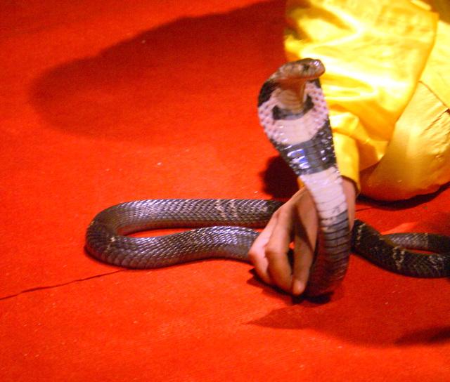 Змеиный питомник