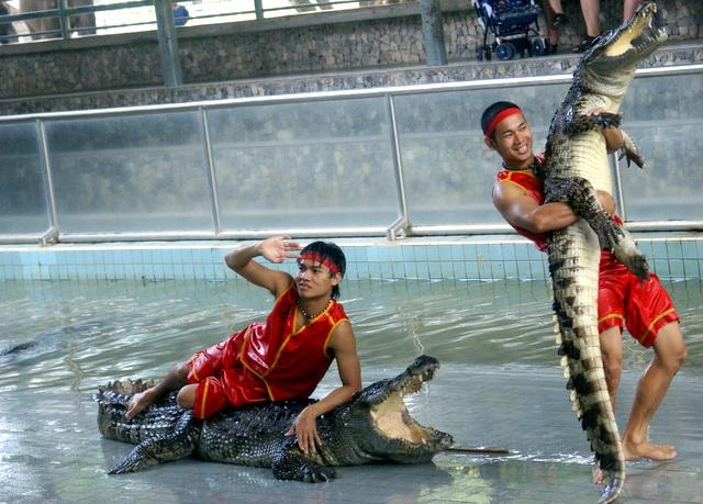 Шоу с крокодилами на крокодиловой ферме