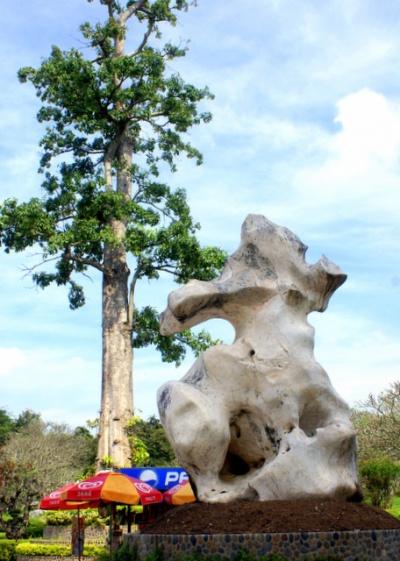 Камень рассказывает дереву о своей шоколадной юности