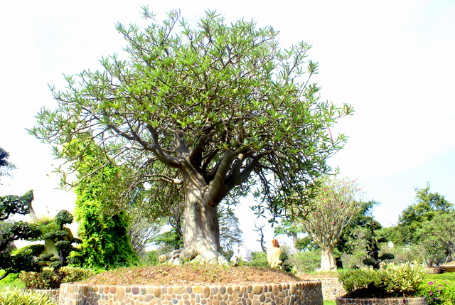 Бансай – игрушечные деревья и листики маленькие
