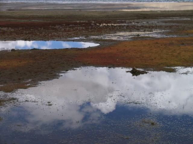 """""""Влажные земли"""", растилающиеся у озера"""