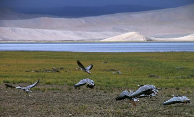 птицы у озера