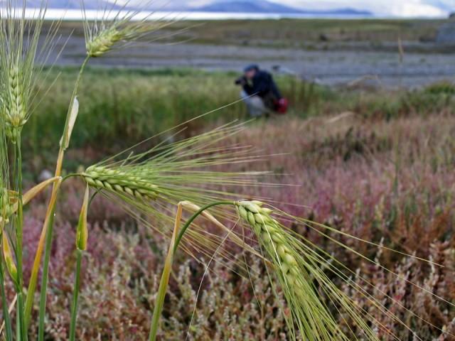 дикие фотографы обитают в полях озера Тсо Морири