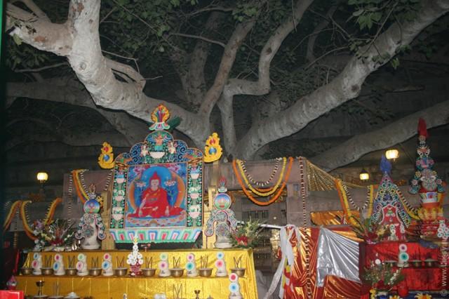 Дерево Махабодхи