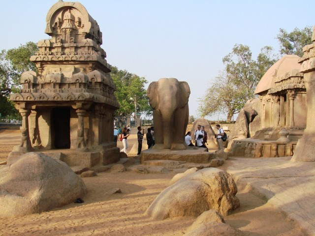 Слон в Панча Радхе