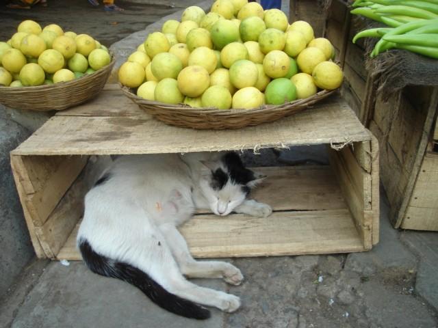 Лимонный домик.