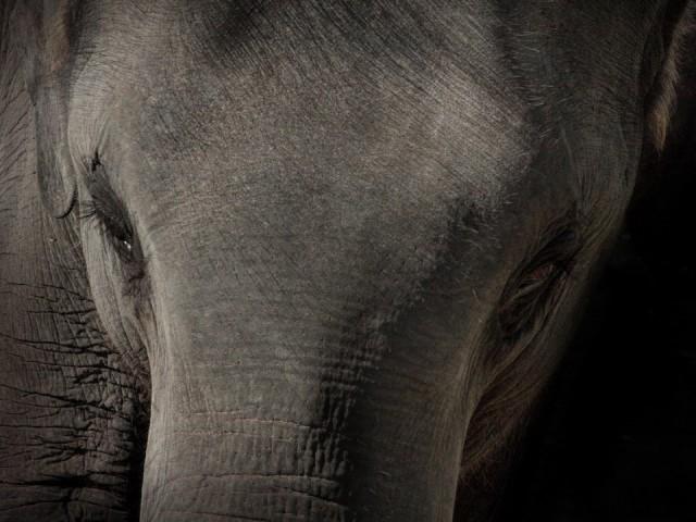 Слонык.
