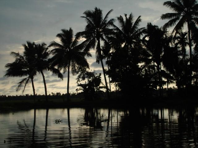 скучаю по пальмам