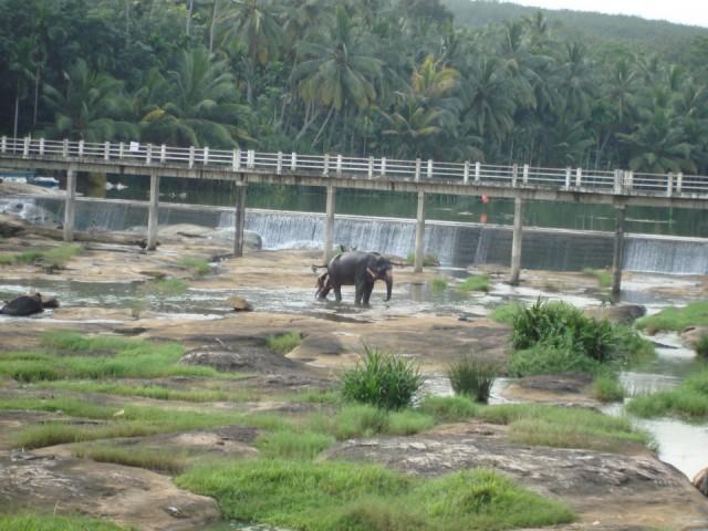 мытье слона в природе