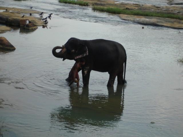 обожаю слоников
