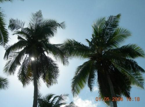 Просто пальмы
