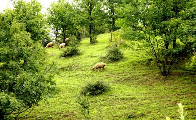 Поклонники альпийских сочных трав