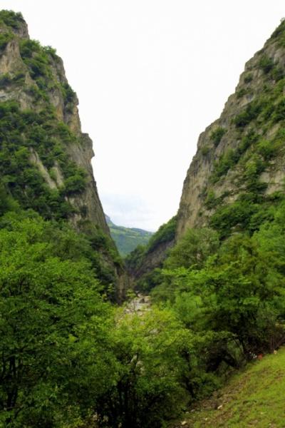 Горное ущелье заросло кустарниками и травами