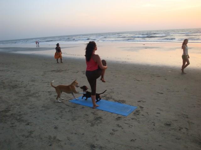 Йога с собаками =)))