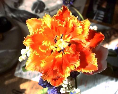 необыкновенные тюльпаны