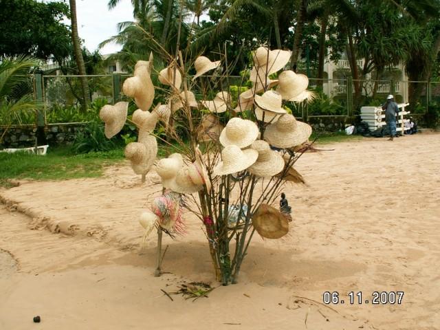 Шляпное дерево )))
