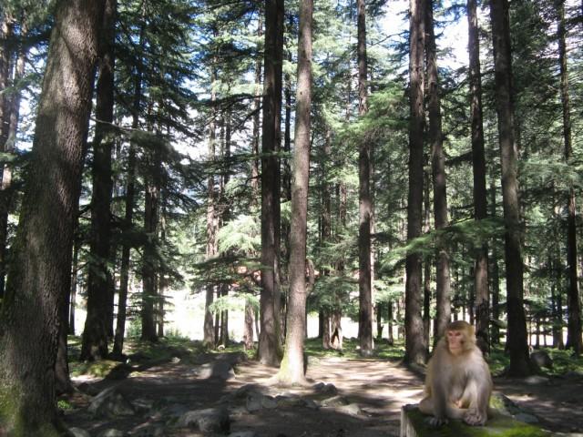 На окраине манальского лесопарка