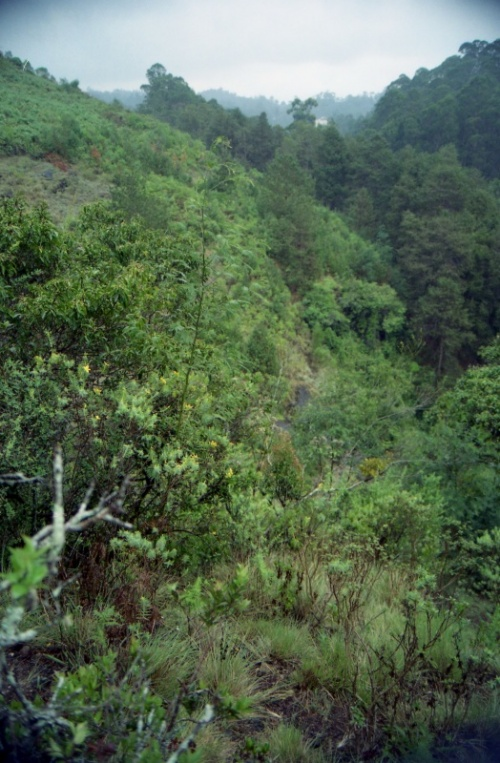 в окрестностях водопада. слева виден зверобой)