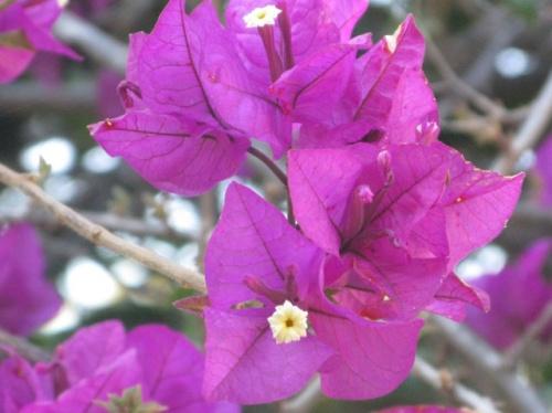 Критские цветы