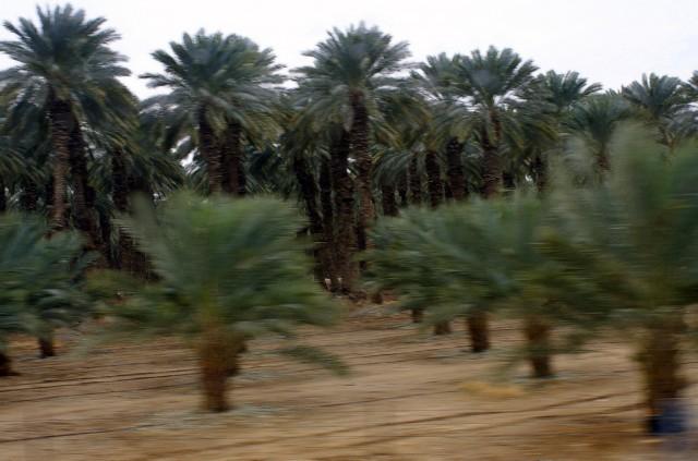 Пальмовый вальс