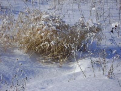 натюрморт зимний