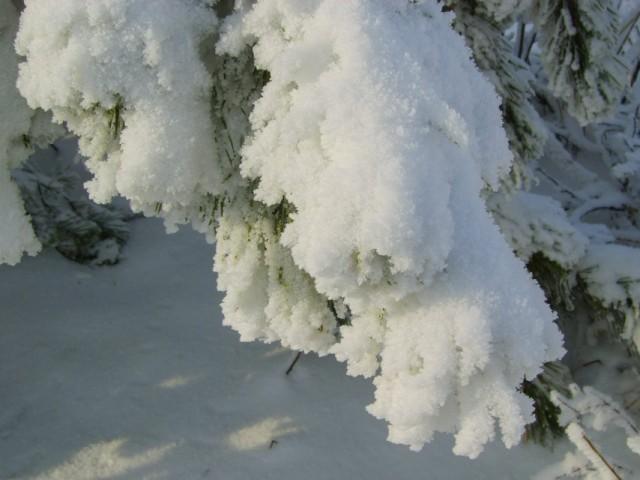 Снежные лапки. :)