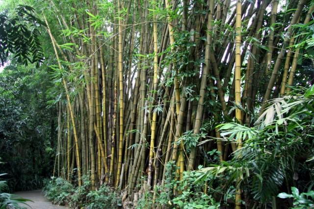 Из стволов бамбука делают строят дома, делают мебель, посуду, корзины, веера, циновки. шляпы и музыкальные инструменты