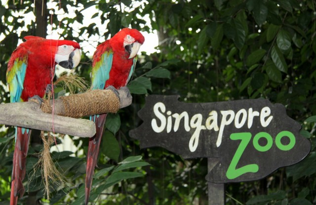 Попугаи ара встречают: Добро пожаловать в страну улыбок!