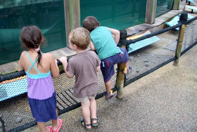 Дети смотрят на морскую корову