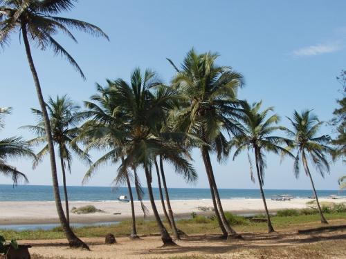 пальмы, море, солнце