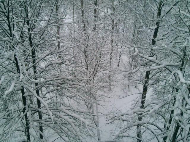 вид из моего окна (форточки)