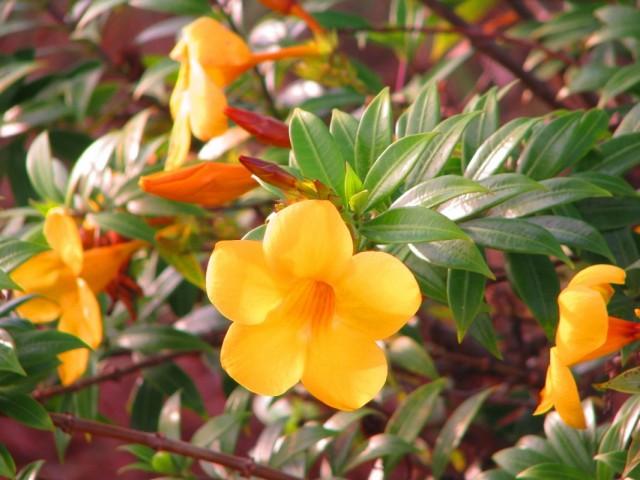 цветы желтые :)