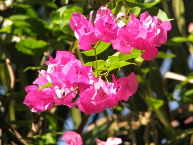 цветы розовые :)