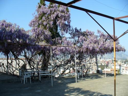 Вид из пансионата Финике