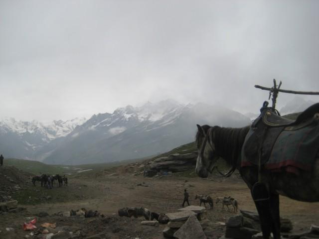 дядивовина лошадка смотрит на Ротанг (шутююю)))