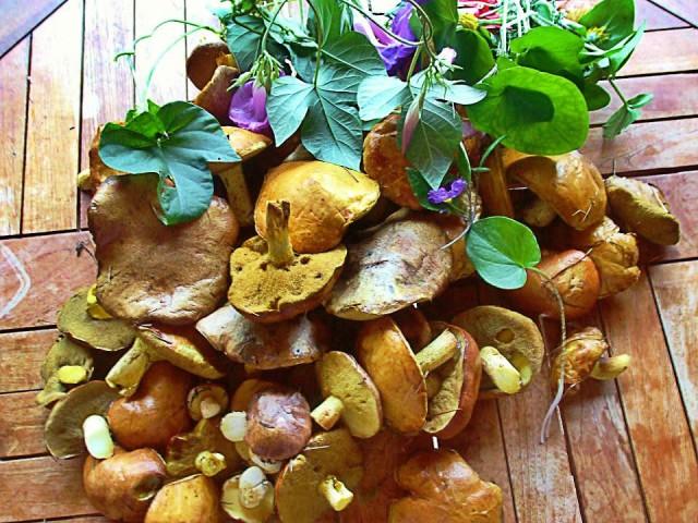 собрали грибы в ельнике рядом с домом