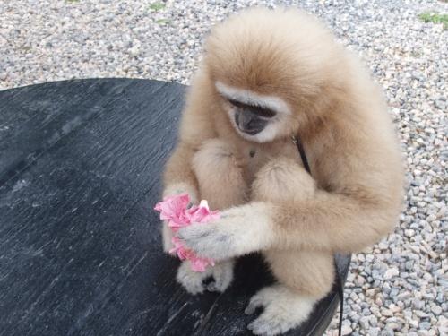 обезьянка с лакомством