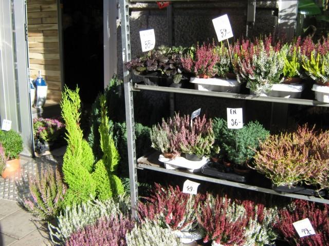 Зимние растения