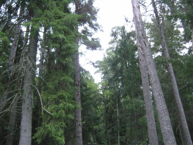 Усадьбу окружает лес