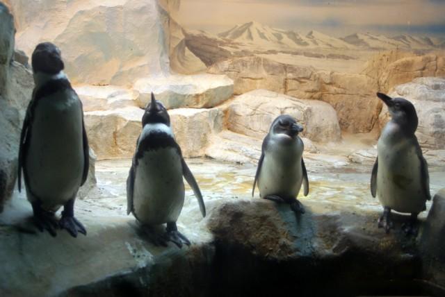 Мечты о далекой Антарктиде