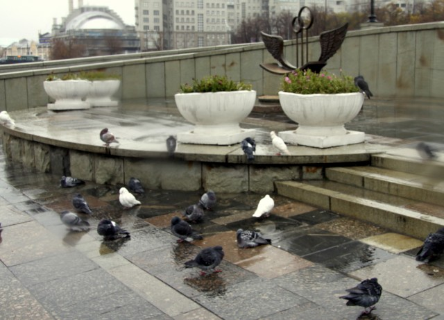 Стремный дождь намочил голубей