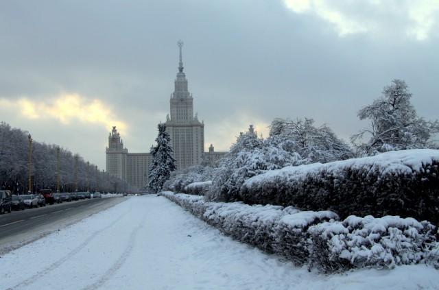 Деревья в снежном плену