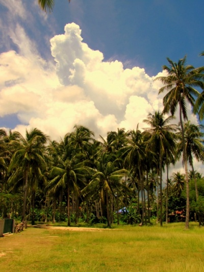 Облака есть продолжение пальм