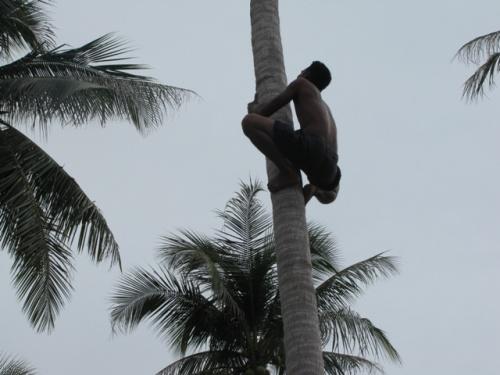 Мужику 35, а он с легкостью забирается на пальму