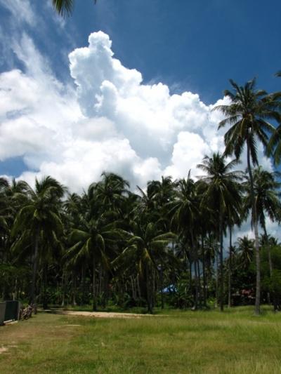 Облака и пальмы