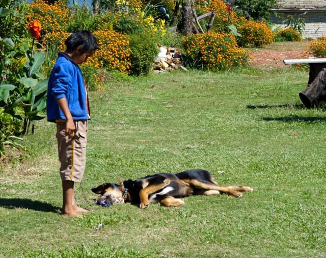 Самая ленивая сторожевая собака на свете.