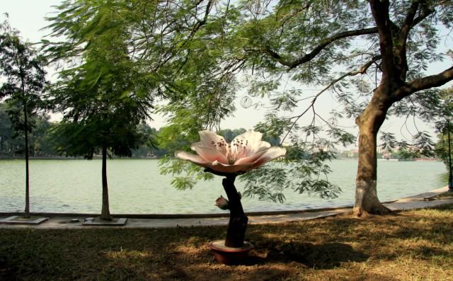 Лотос на берегу озера