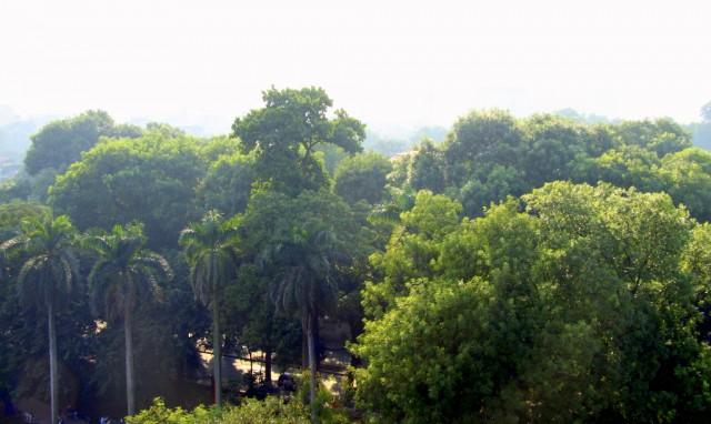 Пальмовые рощи и кущи