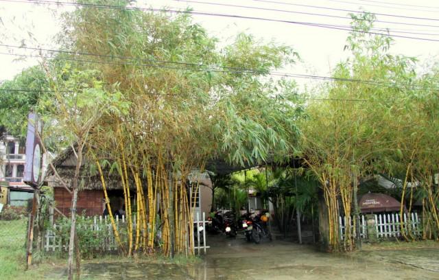 Украшают дворик бамбуком