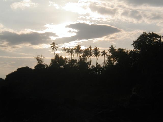 Пальмы в небе